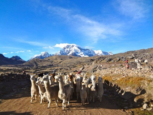 The Apu Ausangate trekking in the Peruvean Andes | What's it like?