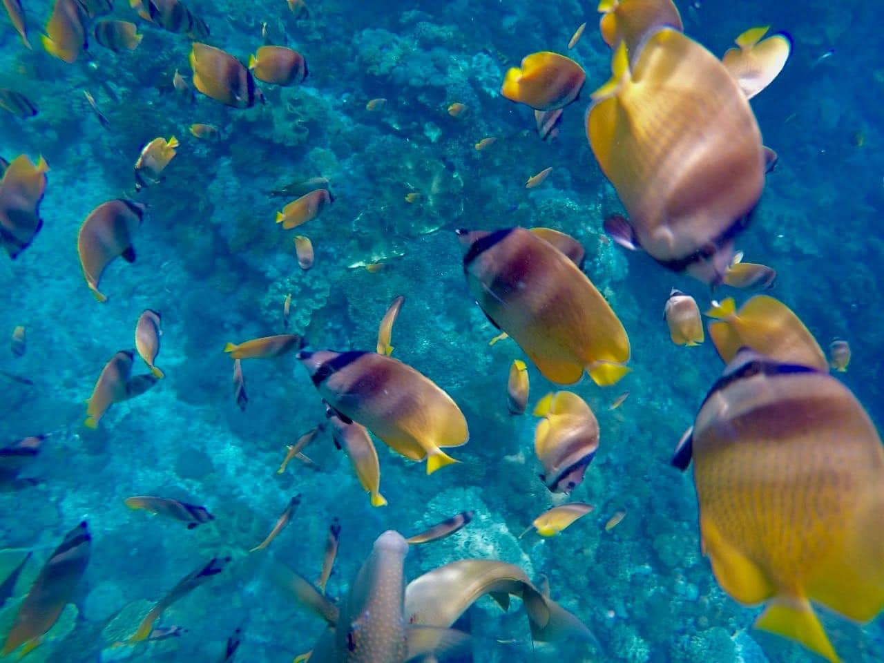 What is biodiversity change?