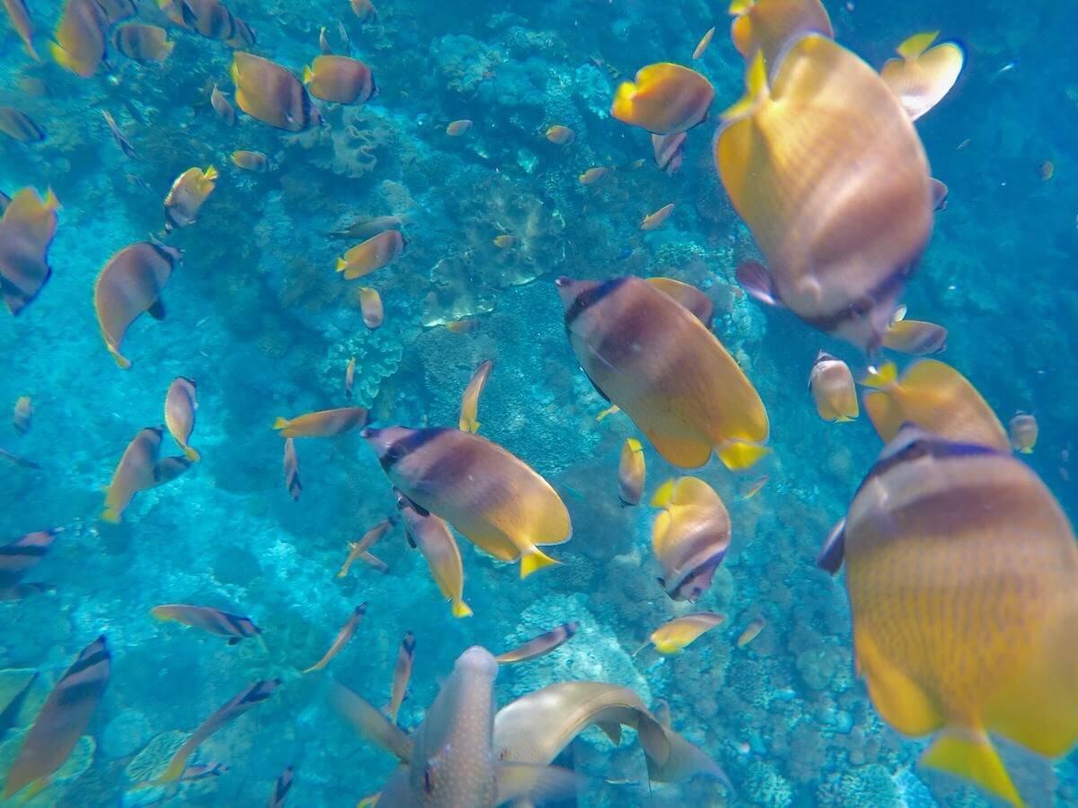 top ocean conservation organisations